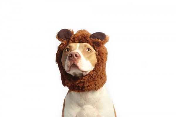 Hunde-Hackfleisch (Nur Abholung)